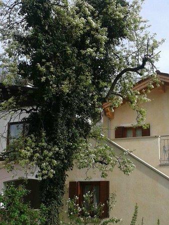 Casa Monticello: Blick zur Terrasse mit blühendem Birnenbaum