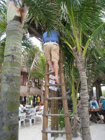 La Buena Vida Restaurant : Climbing up the tree
