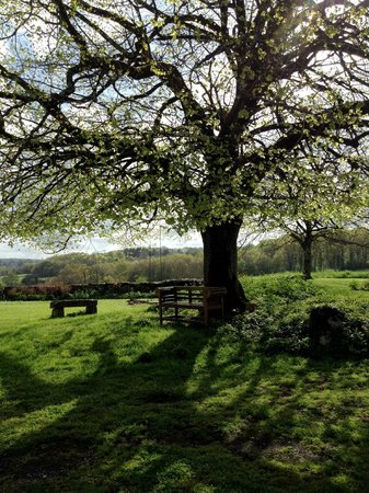 Under The Lime Tree: The Lime Tree