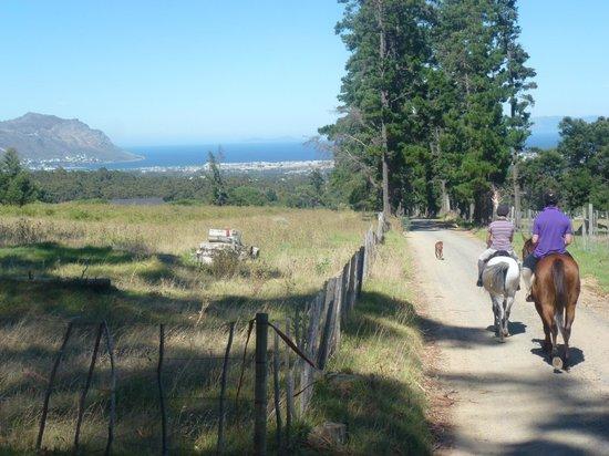 Wine Escapes - Exclusive Cellar & Vineyard Tours: Horse riding past the vineyards.