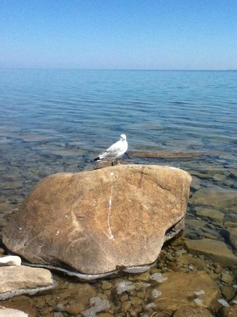 Craigleith, Canada: Bird Sitting On Rock
