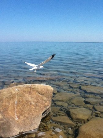 Craigleith, Canada: Bird Taking Off