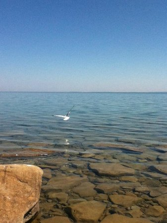 Craigleith, Canada: Bird Flying Over Water