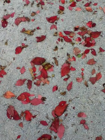 Craigleith, Canada: Fall Leaves