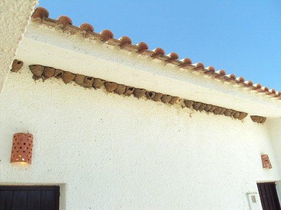 Pedras da Rainha : Colección de nidos de golondrina a la entrada del apartamento.