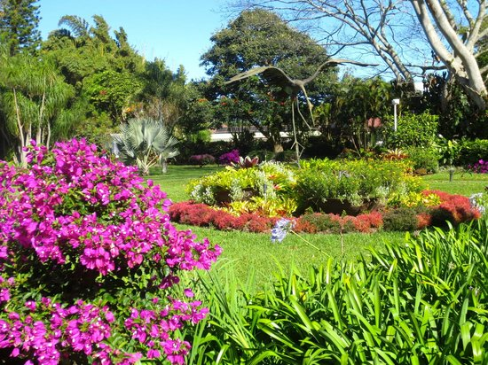 Hotel Bougainvillea : Beautiful grounds and gardens