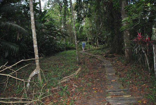 Congo Bongo Ecolodges Costa Rica : In the midst of the jungle!