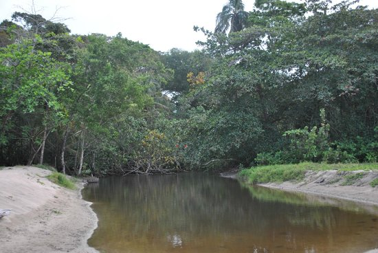 Congo Bongo Ecolodges Costa Rica : On a stroll and came upon this site!