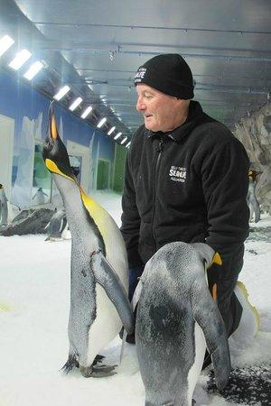 Kelly Tarlton's Sea Life Aquarium: My Experience