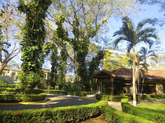Casa Conde Beach-Front Hotel: Hotel grounds