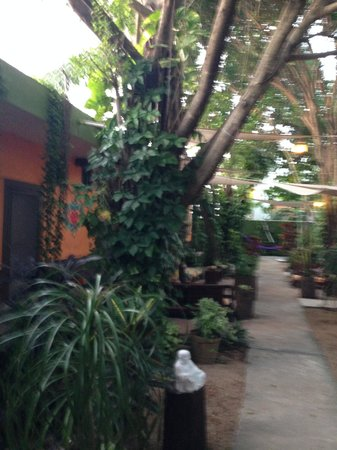 Secret Garden Hotel : Sorry- kind of blurry- outside shot