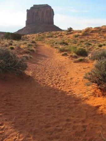 Wildcat Trail : the trail