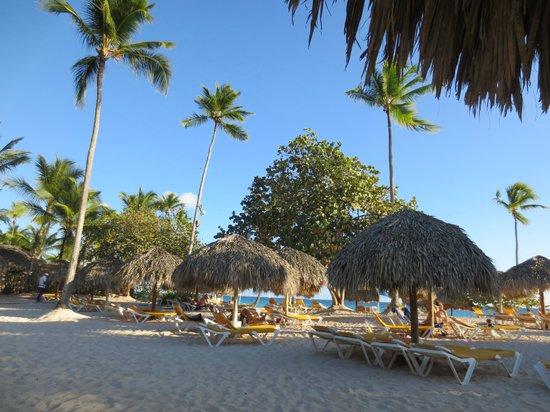 Iberostar Hacienda Dominicus : Beach