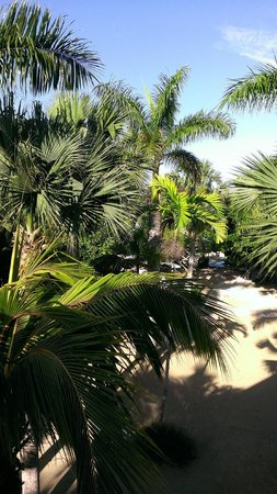 Couples Negril : Beautiful grounds.
