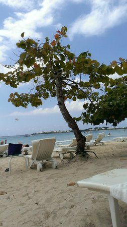 Couples Negril : Seagrapes tree on beach
