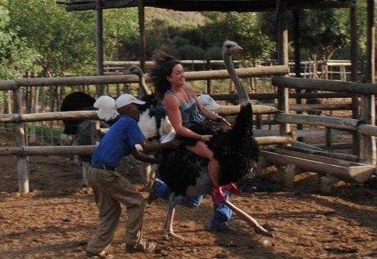 Garden Route: Ostrich riding