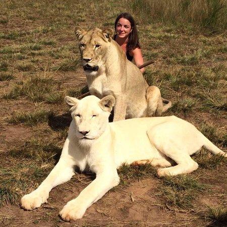Garden Route: Lions!!