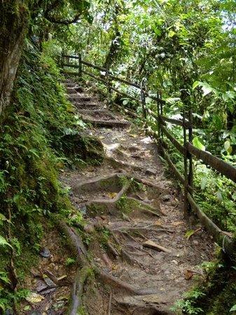 Mindo Nambillo Cloud Forest Reserve: Un sentier typique