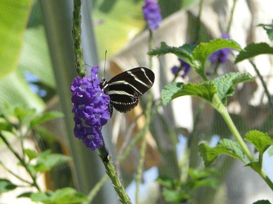 Naples Botanical Garden: Butterfly