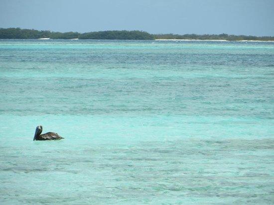 Isla de Carenero - Los Roques: Os animais deixam o lugar ainda mais bonito