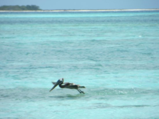 Isla de Carenero - Los Roques: Lindo
