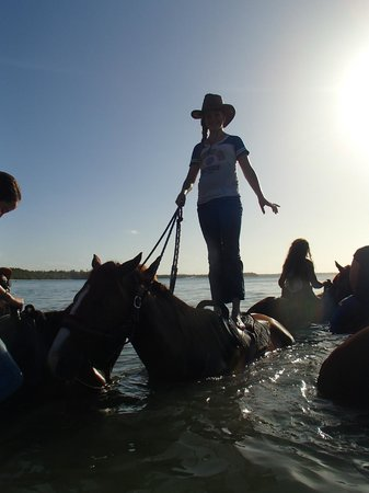 Being with Horses : Swimming with Horses
