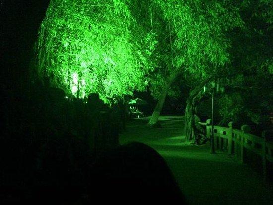 Jiangxin Island : Night Time 1