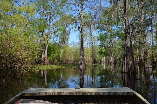 Atchafalaya Basin Landing & Marina- Swamp Tours: Trees!