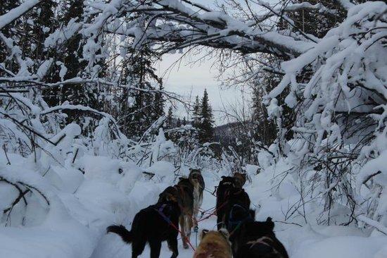 Bettles Lodge: Dogsledding in Winter Wonderland