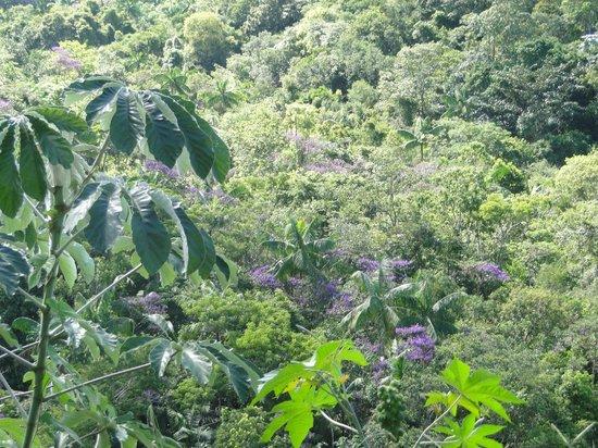 Pousada Serra da India: Vista do chalé