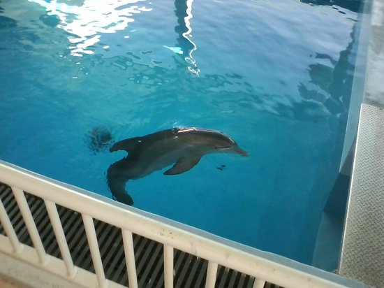 Clearwater Marine Aquarium: Winter