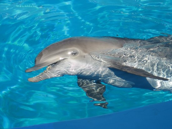 Clearwater Marine Aquarium: Nick