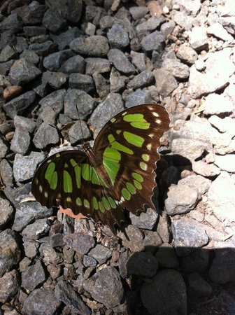 Hotel Luz de Mono: Green butterfly