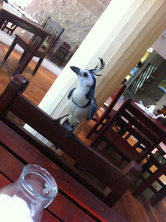 Hotel Luz de Mono: Breakfast bird