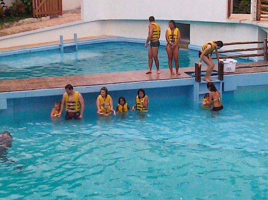 Interactive Aquarium: nado con delfines basico