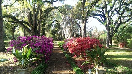 The Myrtles Plantation: grounds