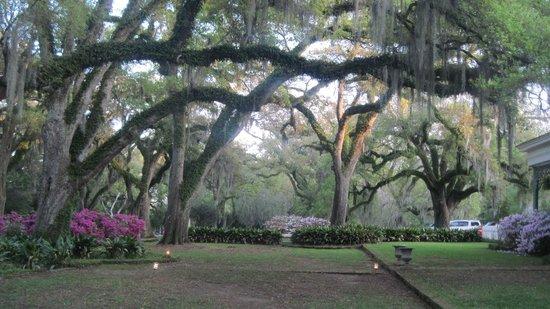 The Myrtles Plantation : grounds