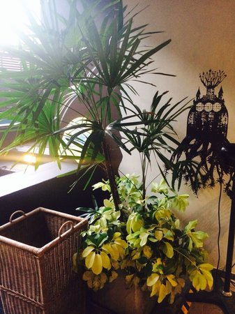 Tenface Bangkok: Plants