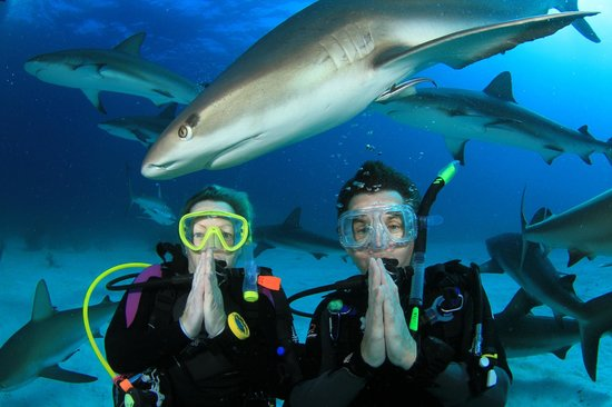 Stuart Cove's Dive Bahamas: 30+ sharks: pray!