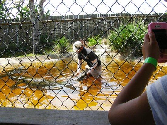 Sawgrass Recreation Park: Gator school