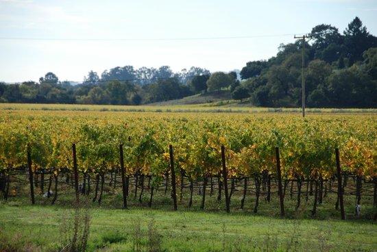 Preferred Limousines -  Napa Valley Wine Tours : Napa Valley