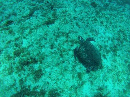 NIrvana Diving School: fond marin 2 voir les tortues avec moniteur Socrates