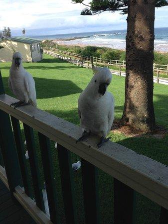 Bulli Beach Tourist Park: Balcony view