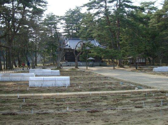 Motsu-ji Temple: 毛越寺遺跡