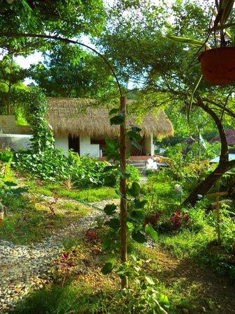 Mandala Bali Bungalow: garden :)
