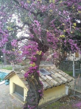 Relais Villa Valentini: Primavera al Relais