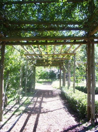 Babylonstoren Garden: Shady walkways - covered with roses and fruit