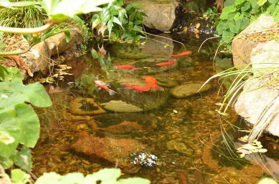 Heritage Trail Lodge: fish pond in the lovely gardens