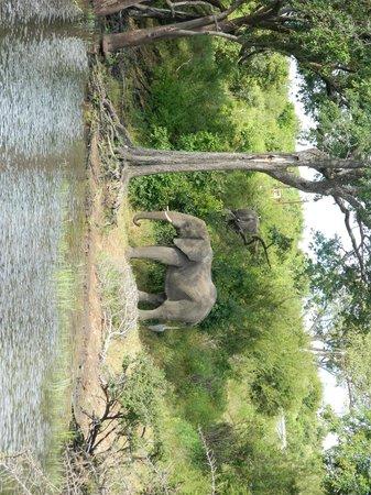 Chobe Safari Lodge : By the River