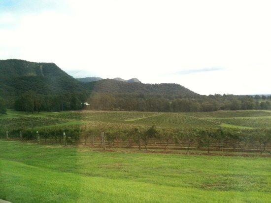 Hunter Valley Wine Tasting Tours : Scenery